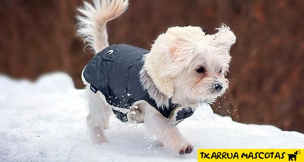 Cistitis fria perros