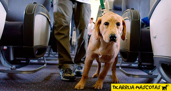 perro en el aeropuerto