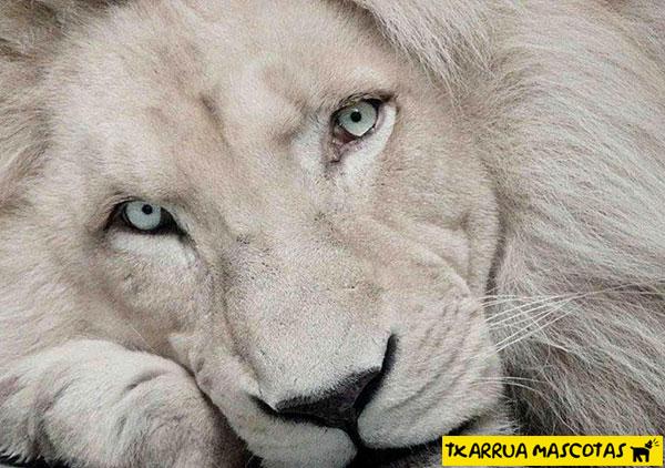 leon albino